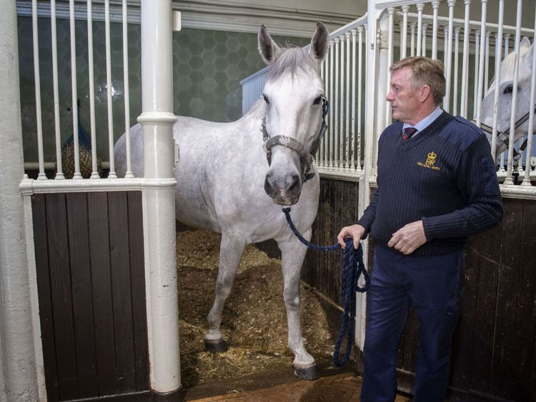 Philip Barnard-Brown, Senior Coachman at the Buckingham Palace Mews, leads out a Windsor Grey, one of the four horses that will pull the carriage