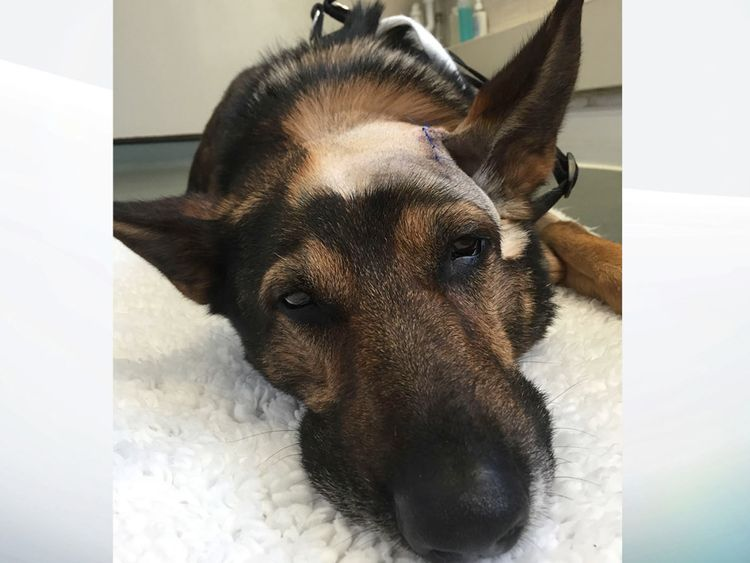 PC Dave Wardell and his police dog, Finn, were chasing a robbery suspect in 2016 when they were attacked with a knife.