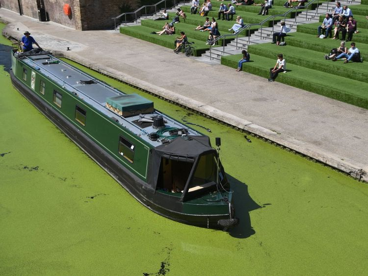 A canal boat passes through algae on Regent's Canal in London during the hot weather
